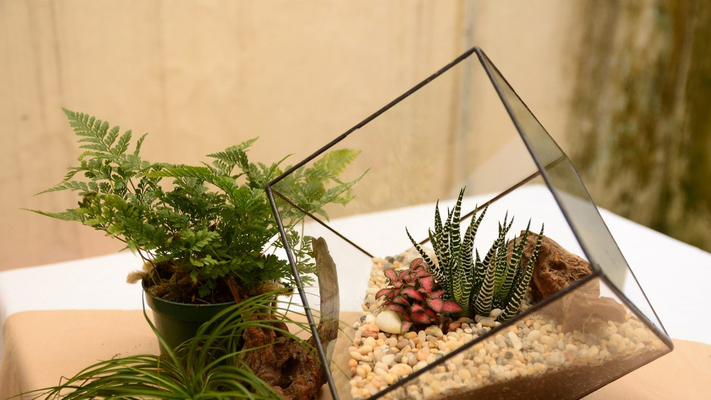 Un terrarium, à la fois cadeau et élément décoratif d'intérieur